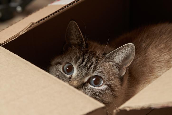 貓咪窩紙箱