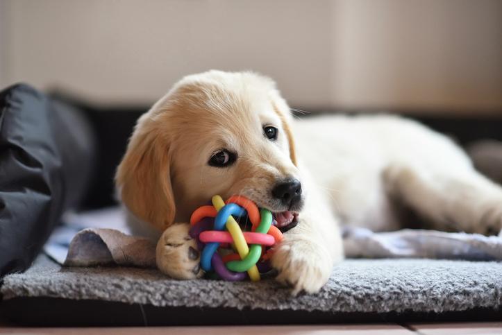 寵物餵食玩具球